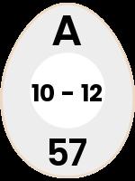 egg45
