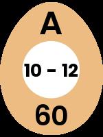 egg52