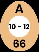 egg53