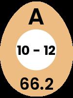 egg134