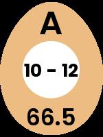 egg96