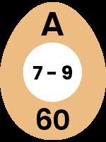 egg91