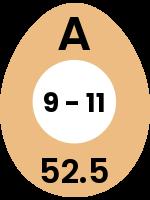 egg11