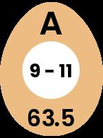 egg145